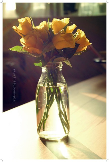 mellow_yellow_rosen