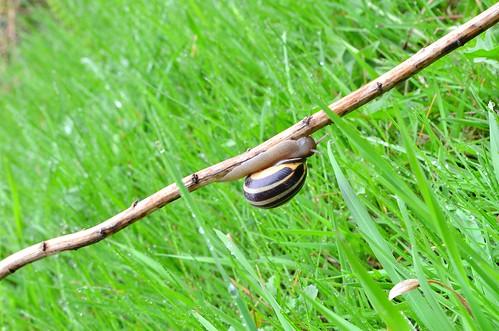 Apr15-Snail2