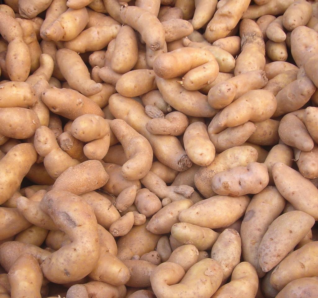 La Ratte fingerling potatoes