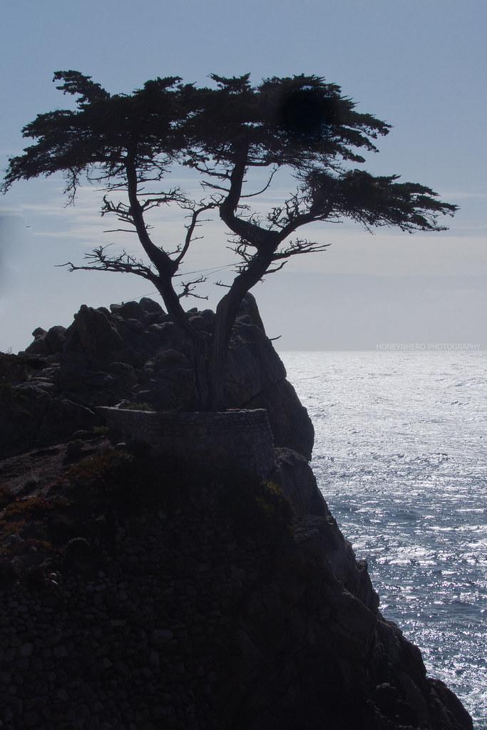 The Lone Cypress Silhouette, Pebble Beach