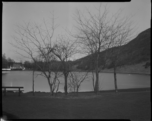 Trees by Holyrood Pond, Crown Graphic - Adox 100 by Sibokk
