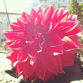 My #shanghai 'yard' is blooming!