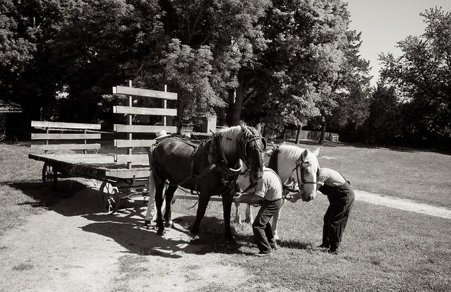 Making Hay 8