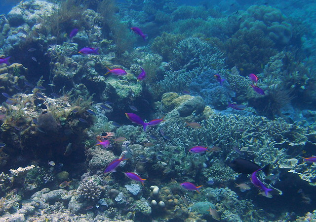 Wakatobi: Colours of the Reef (3/6)