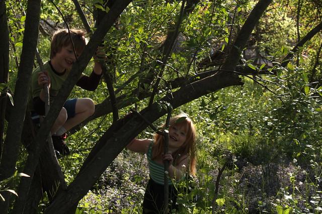 """The Secret Grove"""