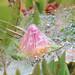Succulent in dew