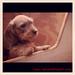 Puppies2web