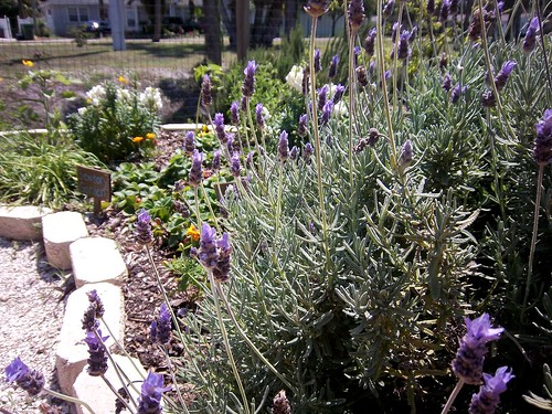 """sensory garden"" in Children's Garden"