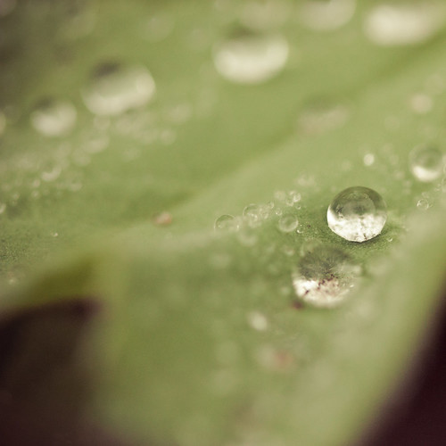 green plant and drops 5
