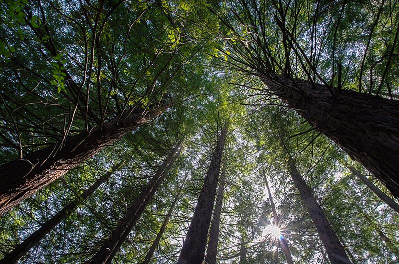 Tree Time