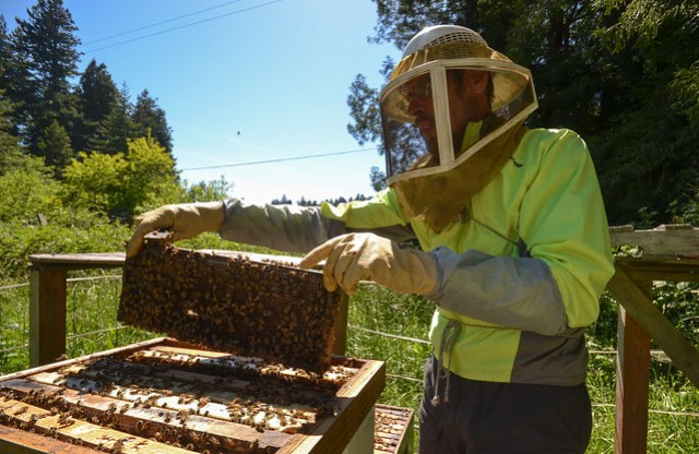 Beehive maintenance