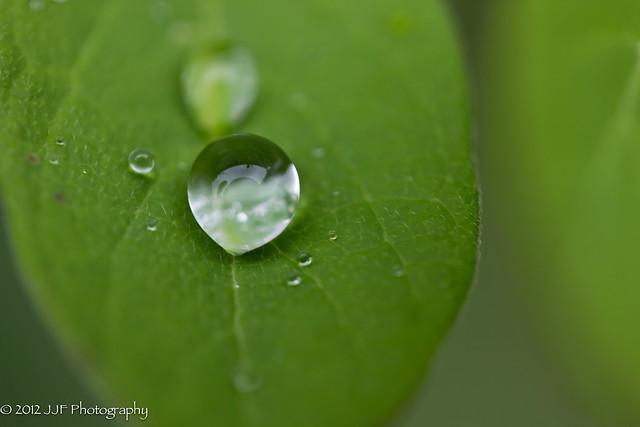 2012_Jun_12_Rain Drops_021