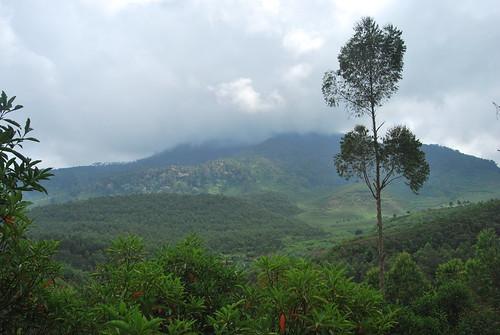 Gunung Bukit Tunggul