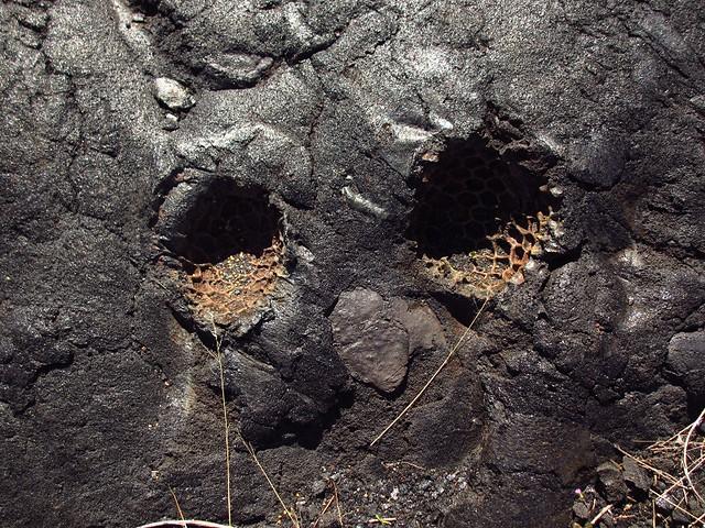fruit imprint in lava