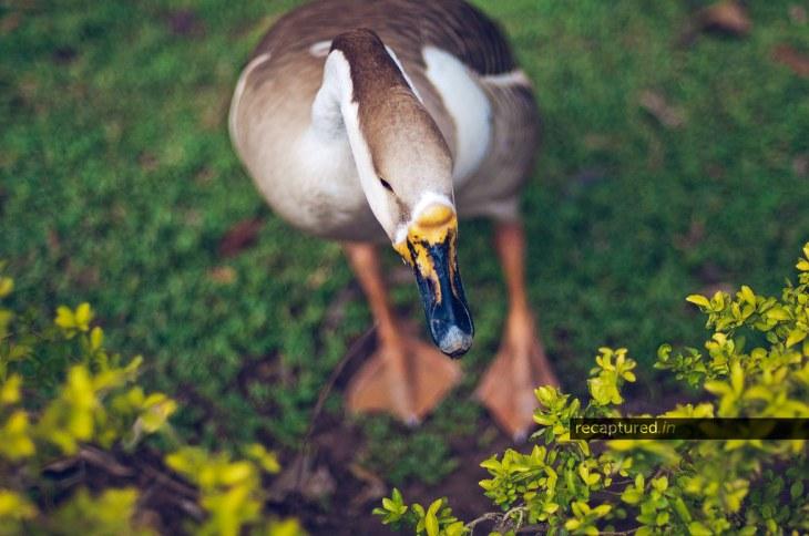 The Lakaki Swan: June 2012