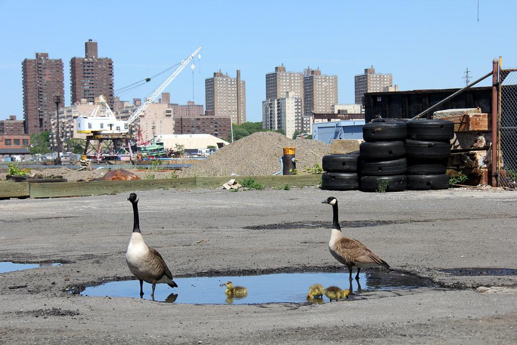 OHNY: Brooklyn Navy Yard
