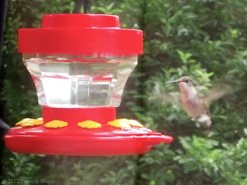 Day 134 First Hummingbird by pixygiggles