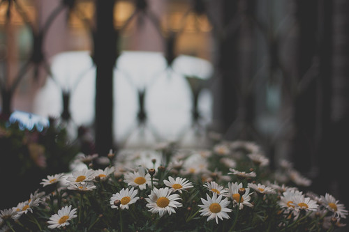 how flowers in a city grow