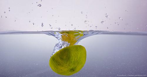 splash food testing