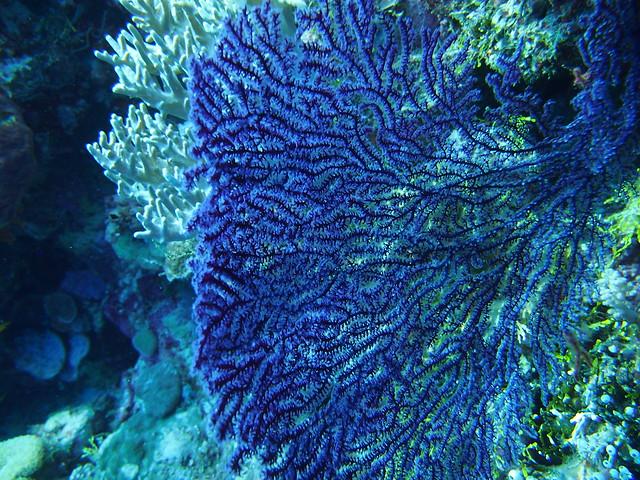 Wakatobi: Pristine Coral (3/6)
