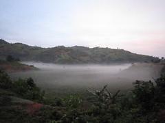 Gorilla trekking, Bwindi - IMG_0003
