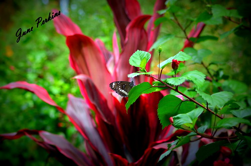 butterfly_folio