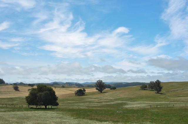 Sonoma county landscape