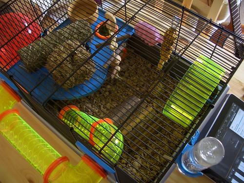 Seb's Cage
