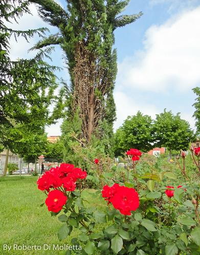 Frosinone in fiore by robertodimo