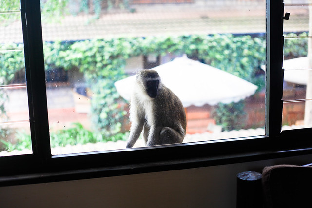 MONKEY INVASION AT SCOOL! (7)