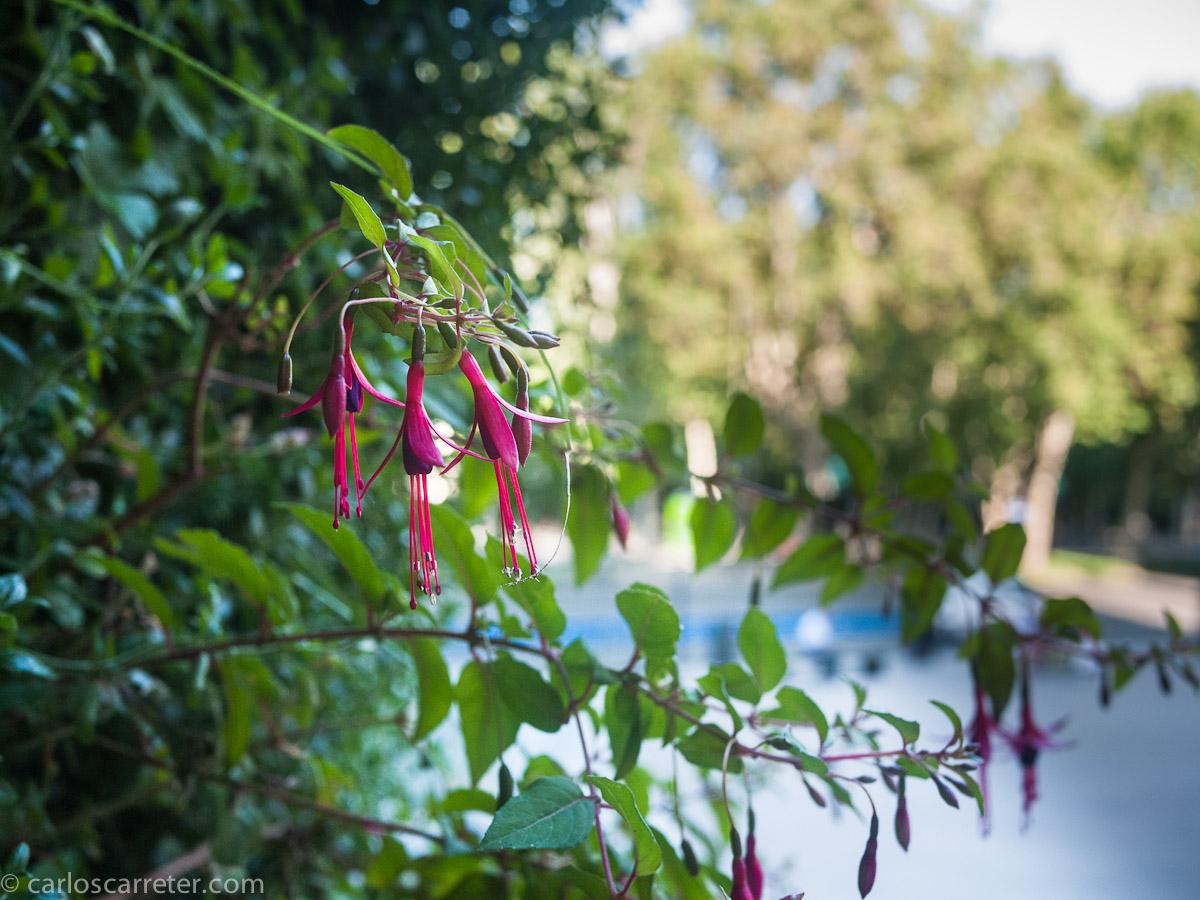 Jardín vertical de Caixaforum