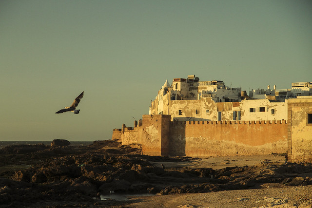 Essaouira fishing port, Morocco