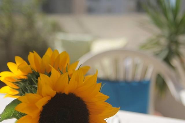 sunshine patio
