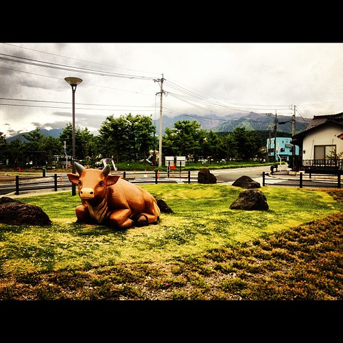 The treasured cow of Aso Kyushu - Japan