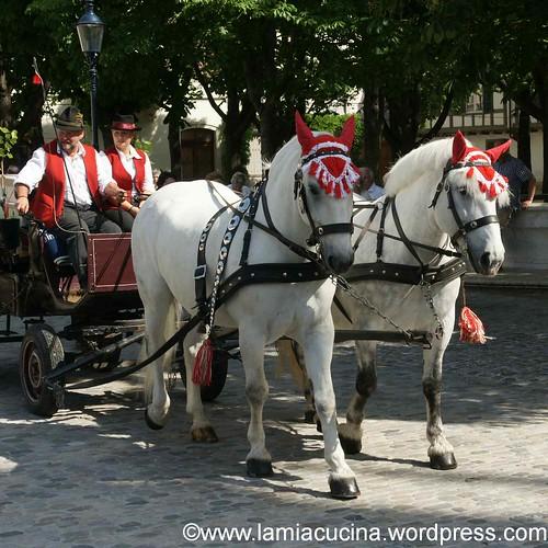 Staatswein 1_2012 06 02_5226