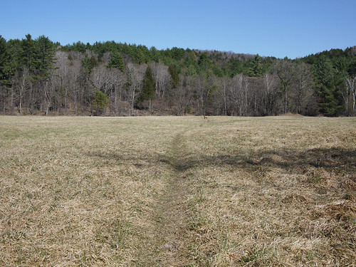 Phoebe's Field and distant Gryfe, ready for spring