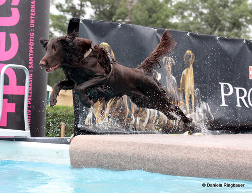 2. Wiener Hundetag