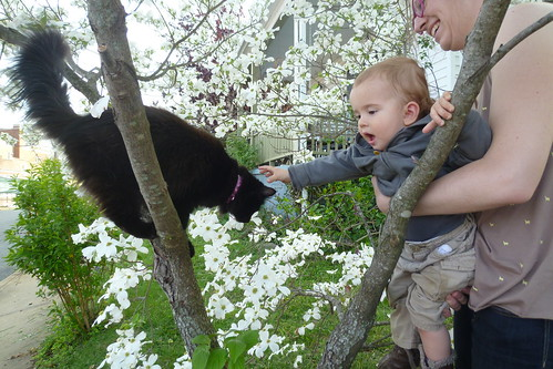 Petting Cats...In Trees!