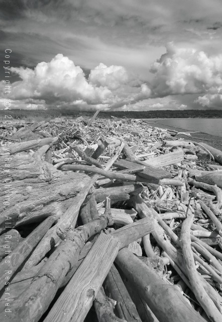 Ebey's Landing Driftwood, 2012
