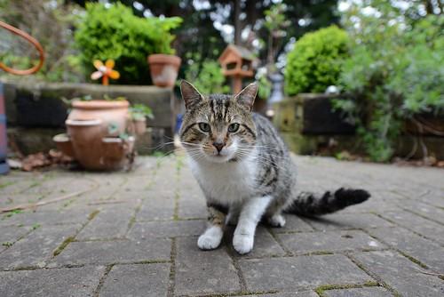 Cat in the Back Garden by wynnert