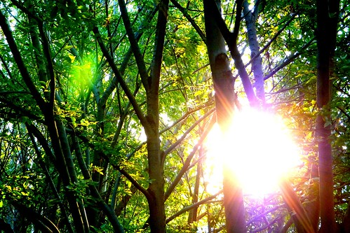 Sunburst by bspoke_snaps