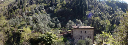 oliveto a Lume
