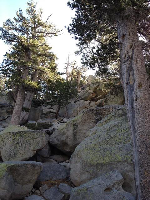 Mt. San Jacinto hike