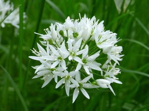 White flowers again