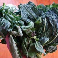 Kale for Beginners