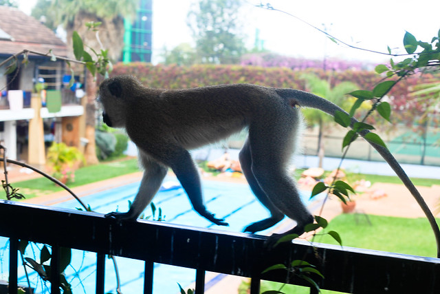 MONKEY INVASION AT SCOOL! (3)