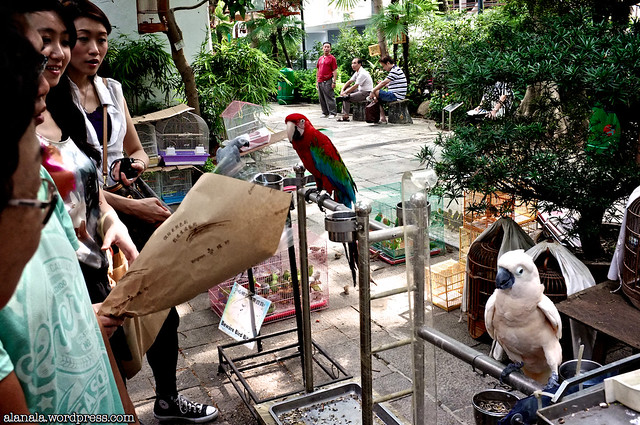 Visitors playing with parrots