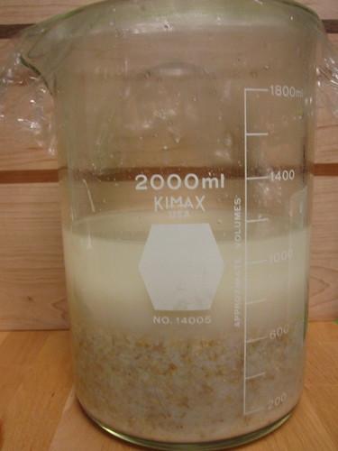 Kuchikami Sake fermenting
