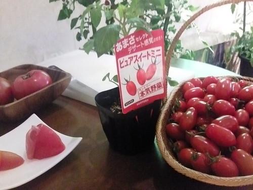 サントリー農園トマト