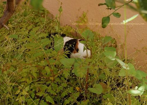 weeds and piggies